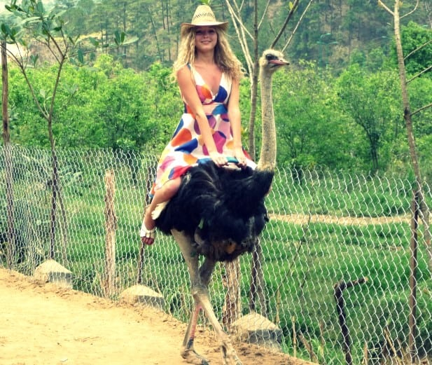 can you ride alpacas
