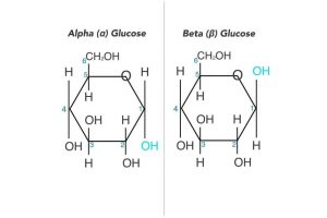 Alpha vs Beta Glucose: Differences and Similarities