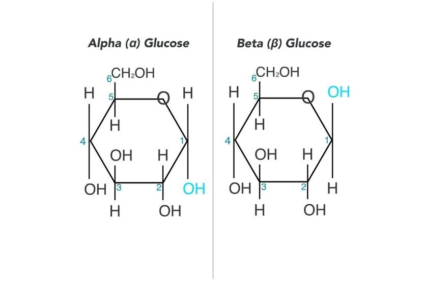 alpha vs beta glucose
