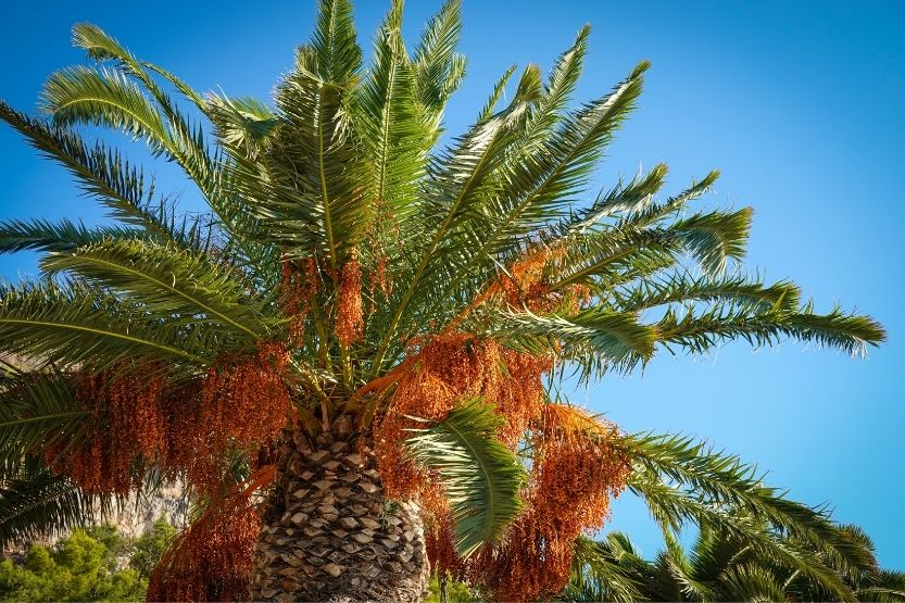 Palm Tree Roots – How Deep Are They? Are They Problematic?