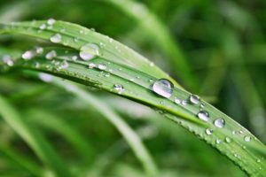 Read more about the article What Is a Comfortable Dew Point? [Comfortable Dew Point Range]