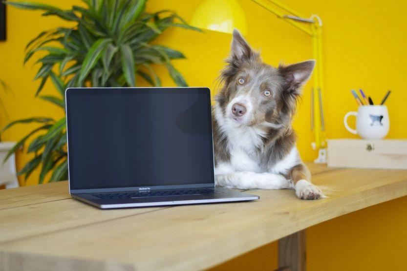 Is a Laptop a PC? Is a PC a Laptop?